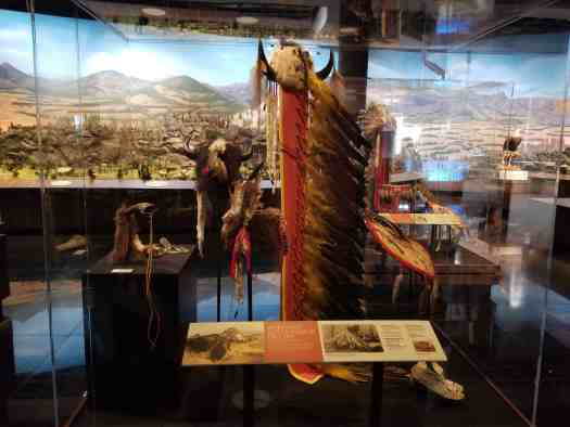 buffalo exhibit
