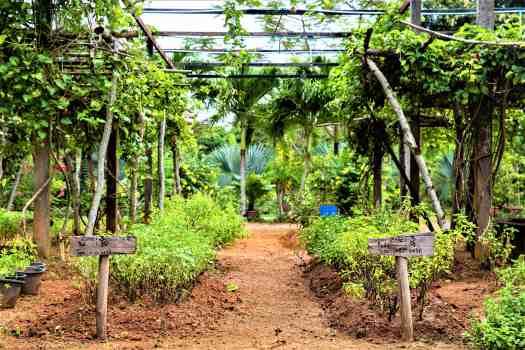 phuket-michelin-restaurant-organic-farm