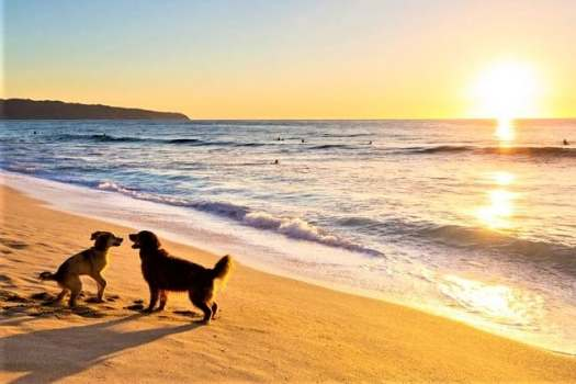 dogs-frolicking-on-beach