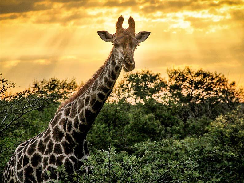 Thula Thula Private Game Reserve & Safari Lodge