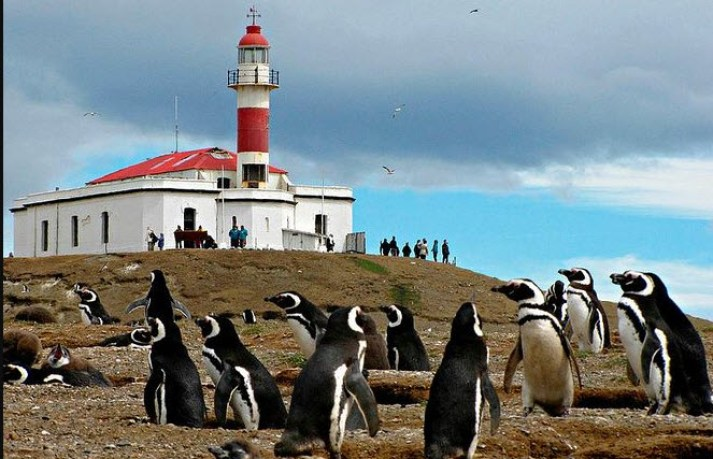 the Penguins on Isla Magdalena - Best Things to do in Patagonia
