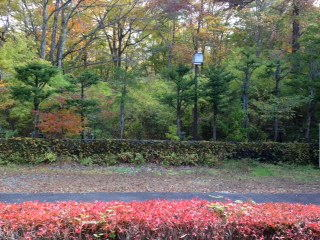 外の眺め(秋)