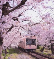 Train in Blossom - favim.com