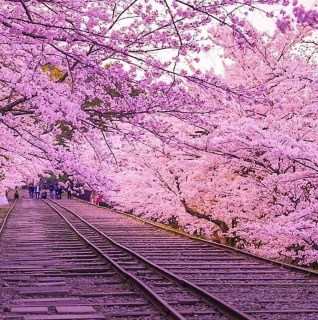 Pink Trees on Track – organizarsempre Instagram