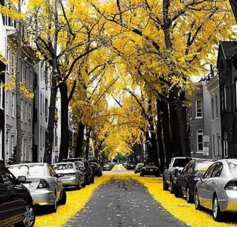 Yellow Street – alexandraposterbennaim Instagram