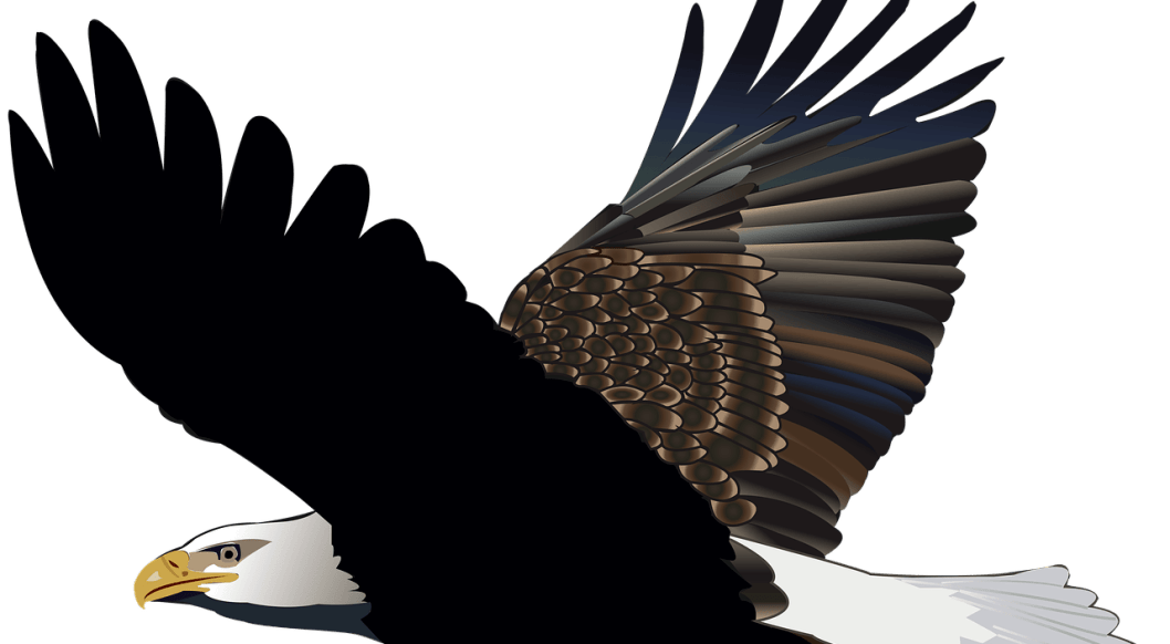 what are bookkeeping principles image of eagle flying to show integrity of purpose