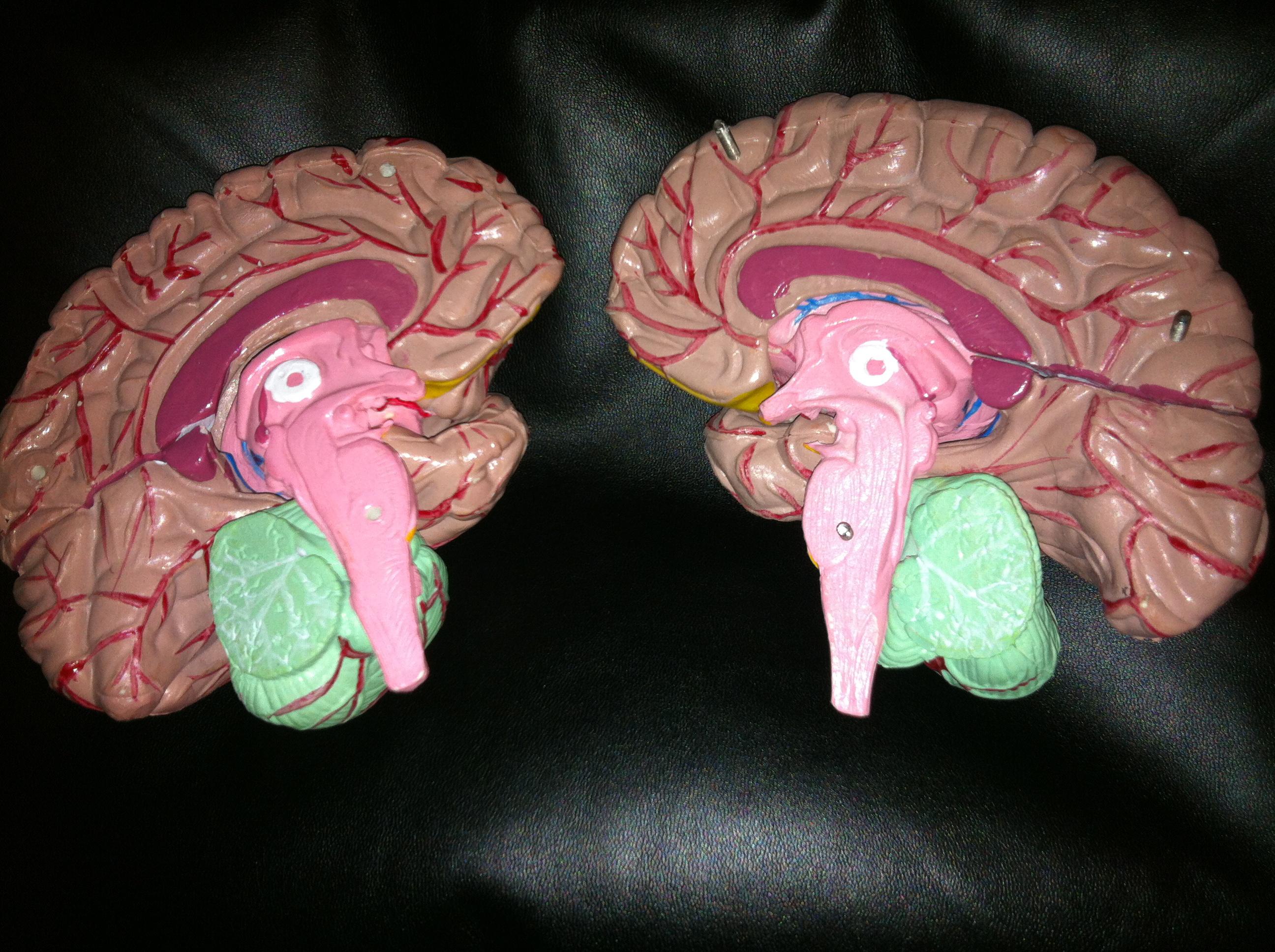 Brain Accurate Body Language