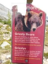 Pat Javorski: Bears At Work