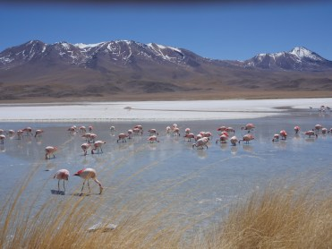 Ken Wong - Flamingos in Bolivia