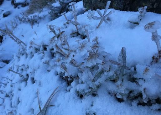 Ulrike Schmidt: early ice on Arrowsmith