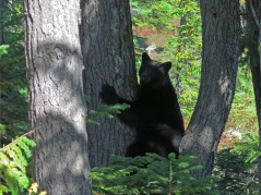Dave Suttill: Tree-Hugging Bear - 2nd Place, Nature