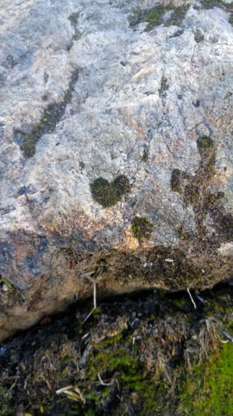 Jules Benson - Moss growing on a rock on Mt Becher