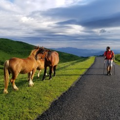 horses-camino