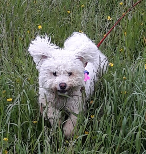 Pixie20161201recall running up cropped