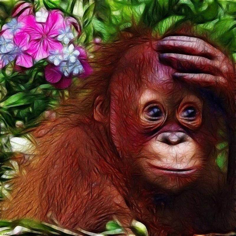 для красивые открытки с обезьянами туда, она