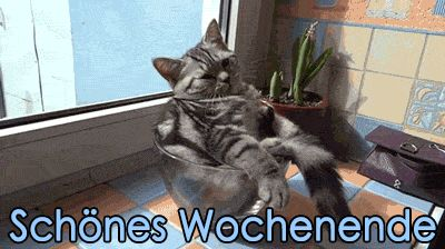 Dreamies De Wochenende Lustig Seltsame Katzen Bezaubernde Katzchen