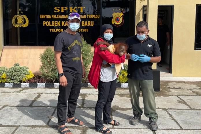 Polda Aceh Tangkap 4 Penjual Satwa Dilindungi dan Sita 1 Orang Utan Sumatera