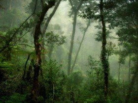 Dua pencari kayu hilang di belantara Aceh Barat
