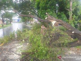 Angin Kencang Landa Aceh