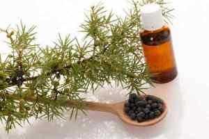 aceite esencial de baya de enebro