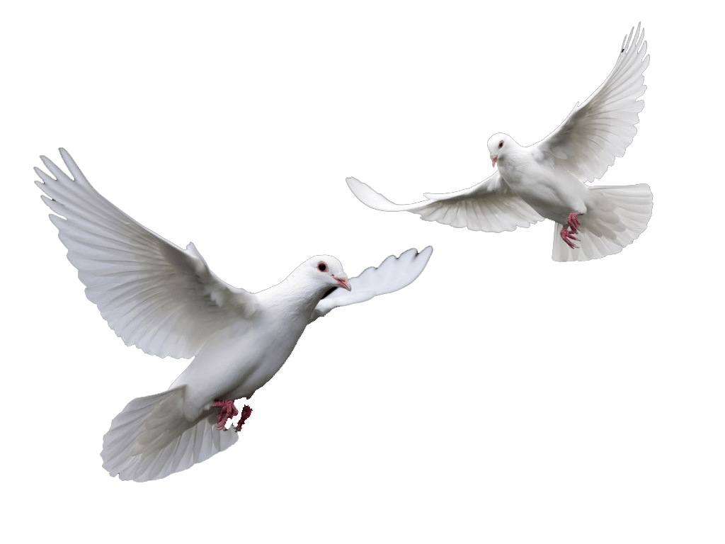 https://i2.wp.com/acelebrationofwomen.org/wp-content/uploads/2013/02/Doves.png