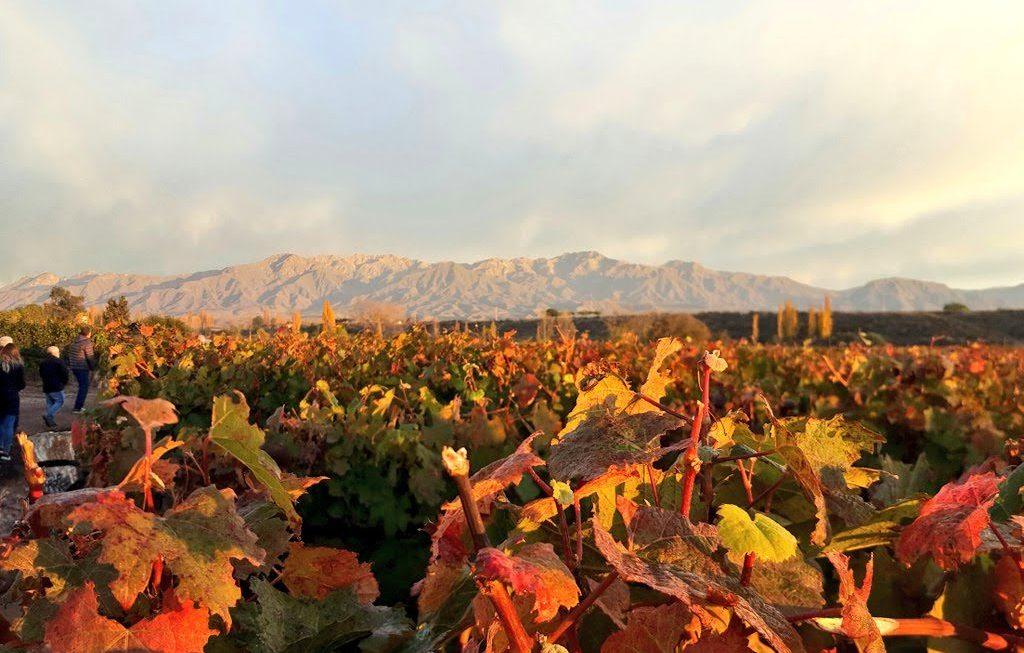 ¿Por qué escribir un blog de vinos? 2