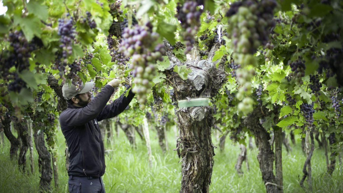 Llega #MasterclAAS, el primer encuentro virtual de vinos organizado por la Asociación Argentina de Sommeliers