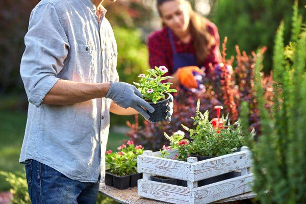 Dlaczego warto korzystać z pomocy projektanta ogrodów