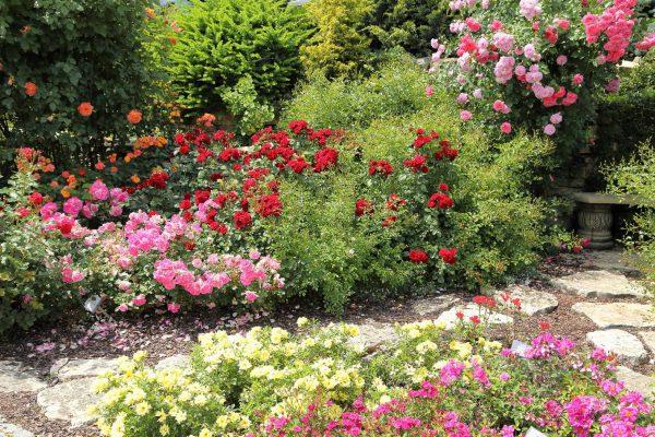 Postaw na ogród różany, wszystko znajdziesz w dobrym sklepie ogrodniczym
