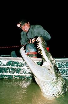 O pesquisador Ronis da Silveira captura um grande jacaré açu para pesquisa. Mamiraua, Amazonas, Brasil. Foto Paulo Santos