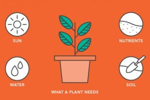 Free Online Course on How Plants Grow: The Essentials