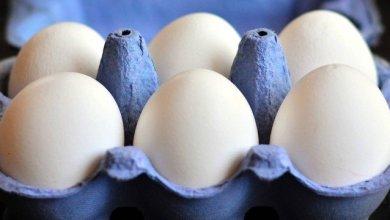 Photo of Ovo é considerado um aliado da alimentação saudável