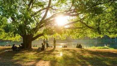 Photo of Contato com a natureza melhora a saúde mental, mostra estudo