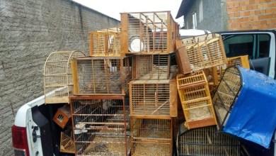 Photo of Mais de 40 pássaros são apreendidos e homem é multado