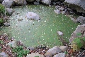 Fall_waterhole