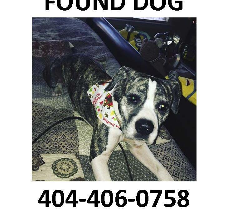 Lost Dog at Achasta