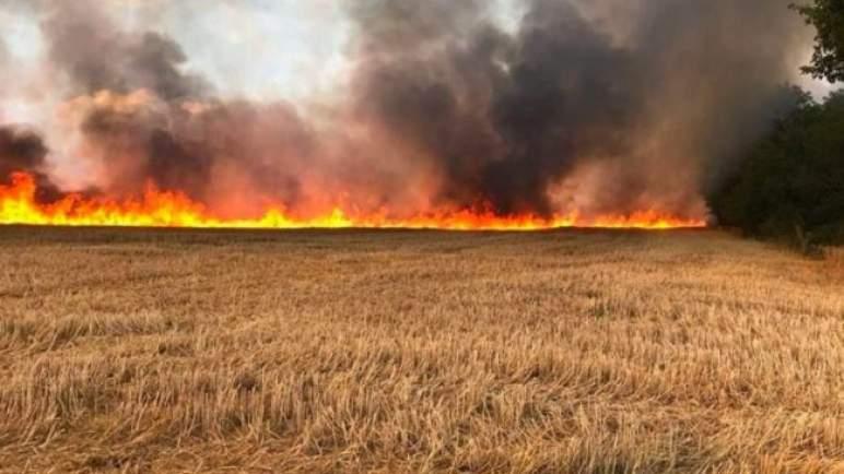 حريق يأتي على مساحة تناهز 25 هكتارا من الحبوب ببني ملال