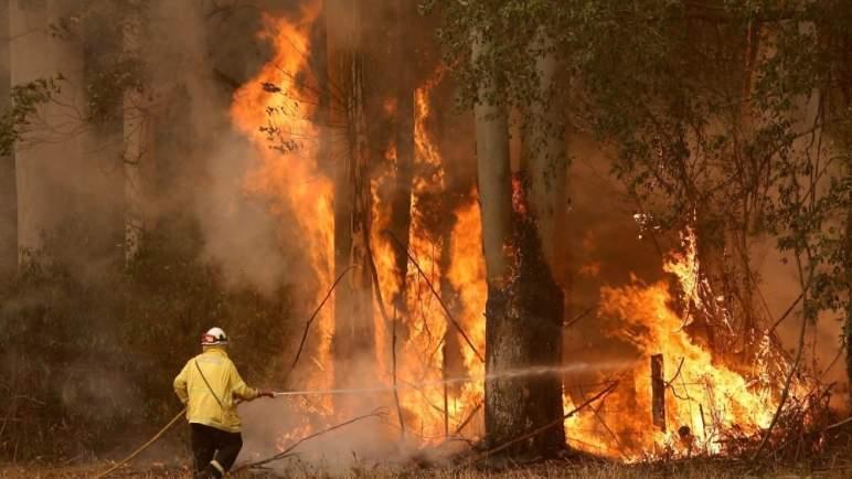 حرائق الغابات تزيد من وفيات كورونا!
