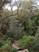 Forest Below