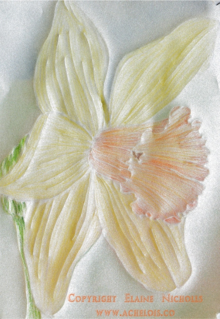 Daffodil vellum mothers day card cu1