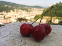 53° Mostra delle ciliegie