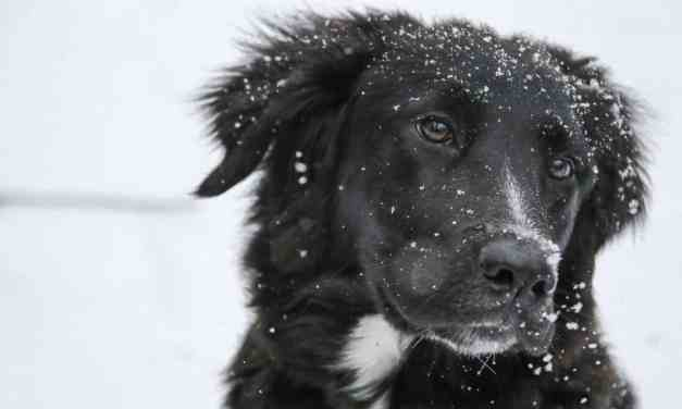 Winter Weather and Proper Dog Care