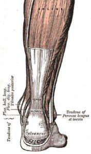 250px-achilles-tendon