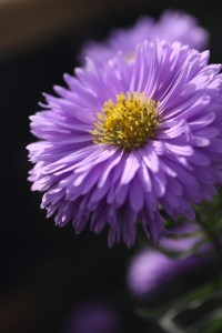 aster-591311_640