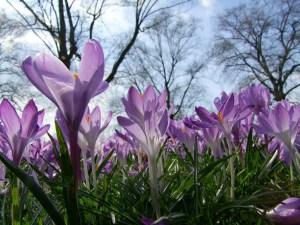 flowers-270985_1280