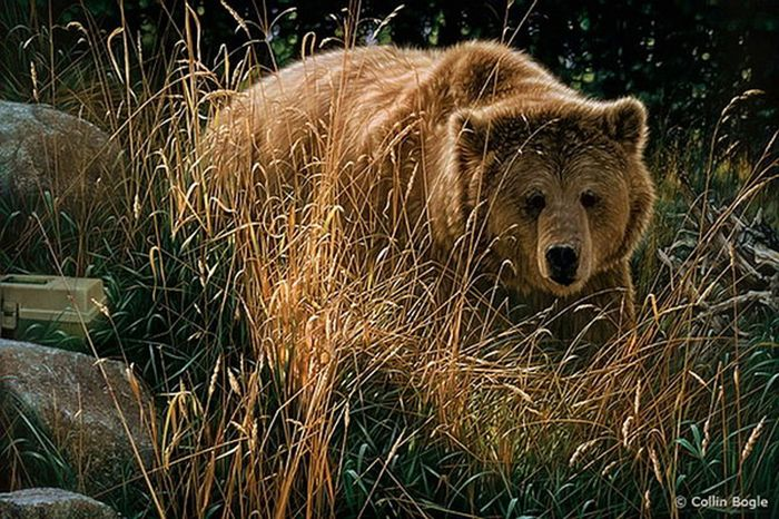 Beautiful Wildlife Paintings by Collin Bogle (20 pics)