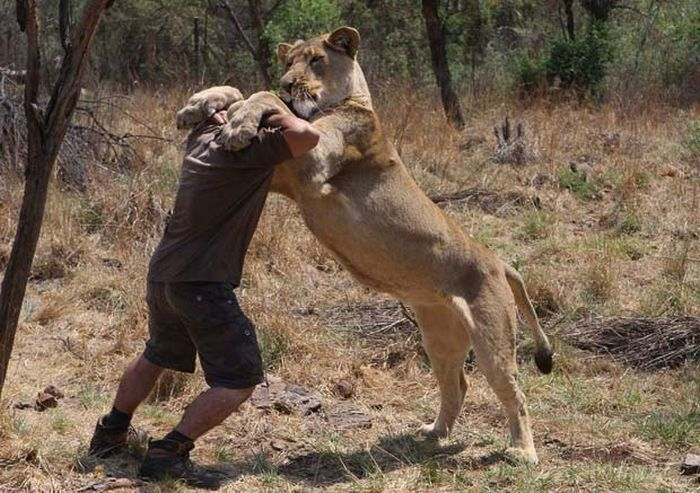 the_lion_whisperer_08.jpg