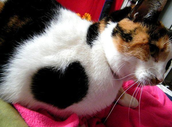 Tiernos gatitos: Los gatos de los corazones