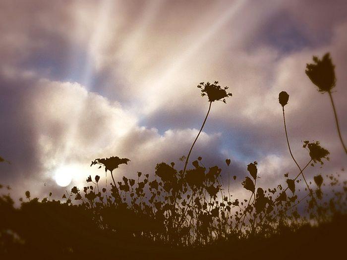 Sunbeams (26 pics)