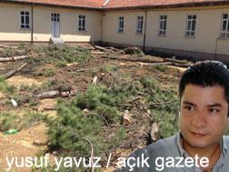 Okul bahanesiyle yapılan ağaç katliamına tepki yağdı!